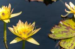 Longwood trädgårdar - Urban trädgård arkivfoton
