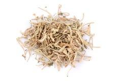 Lonicera japonica Stock Image
