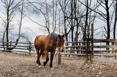 Lonley horse Stock Photos