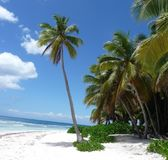 Palm trees in the Dominican Republic. Lonley Palm trees beach in a nature reserve called saona in the Dominican Republic Royalty Free Stock Photos