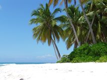 Palm trees in the Dominican Republic. Lonley Palm trees beach in a nature reserve called saona in the Dominican Republic Royalty Free Stock Photography