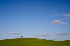 Lonley Tree Royalty Free Stock Photos