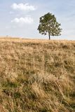 Lonley tree stock image