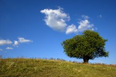 Lonley tree. A tree on yellow grass hill in late summer Royalty Free Stock Photos