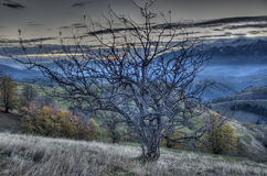 Lonley tree. Night landscape Royalty Free Stock Photo