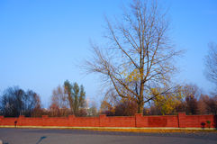 Lonley tree Royalty Free Stock Images