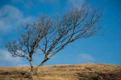 Lonley tree Stock Photos