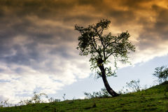 Lonley tree Stock Photography