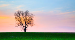 Lonley Tree at Sunset Royalty Free Stock Photos