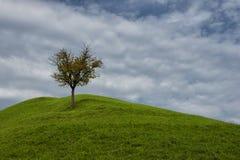 LONLEY TREE Stock Photography