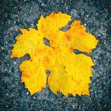 Lonley maple leaf of autumn lying on the ground Stock Photos