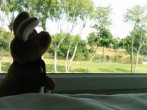 Lonely kangkaroo doll in the resort Stock Photos
