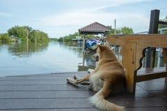 Cute dog sitting near river. stock photo