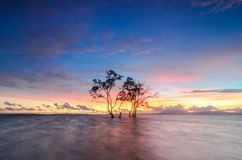 Lonly Tree in The Beach. This tree actually there are four but visible for its own close, this tree is located in Sebalang Beach, South Lampung Royalty Free Stock Photo