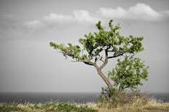 Lonly tree Royalty Free Stock Photo