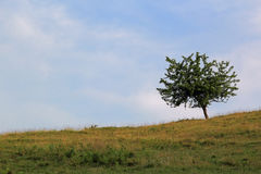 Lonly tree. In the Carpathians mountains Stock Image