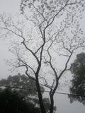 A lonly tree. This is a image of a tree with the morning mist Royalty Free Stock Photos