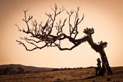 Lonly tree Royalty Free Stock Photos
