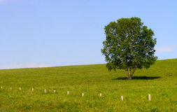 Lonly tree on prairie Royalty Free Stock Photo