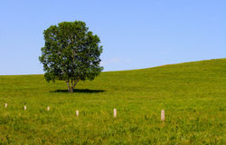 Lonly tree on prairie Royalty Free Stock Photography