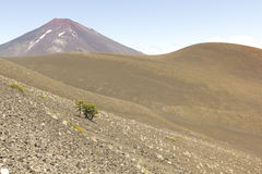 Lonquimay and tolhuaca volcano, Chile Royalty Free Stock Images
