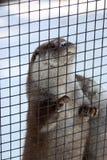 A lontra quer o escape imagens de stock royalty free