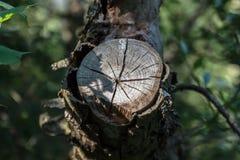 Loodrechte foto van een boom met een besnoeiingstak Royalty-vrije Stock Foto