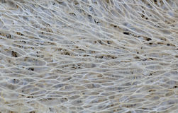 Loofah texture background. Close up of loofah texture background Stock Images