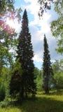 Loofbomen, die zich in de afstand uitrekken Stock Foto's