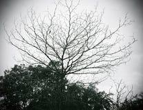 Loofbomen en hemel op zwart-witte wijze Stock Foto's