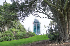 Looing through trees in Takapuna Beach Reserve to a high rise to Stock Image