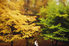 A look from afar on a peacefull newlyweds standing in an autumn. Forest Royalty Free Stock Image