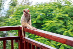 Look around the monkey Royalty Free Stock Image