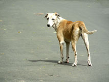 A look back. A lonely stray dog on the street looking back Stock Images