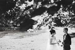 A look from behind the branches on a wedding couple.  Stock Photography