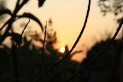 Look behind the leaves of a plant to see the sun set royalty free stock photography