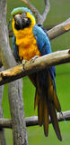 Look at the birds - colorful parrot Stock Images