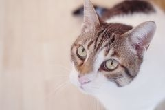 The look of the cat. The look of a domestic cat Stock Image