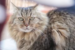 The look of the cat. The look of a domestic cat Stock Images