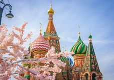Moscow and St. Basil Cathedral at spring day through flowering tree royalty free stock photography
