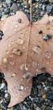 Look closer. Leaf water drops royalty free stock photo