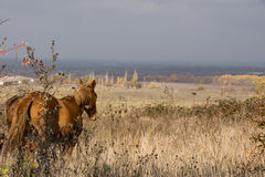 Look in distance. The horse looks intently into steppe Stock Photo