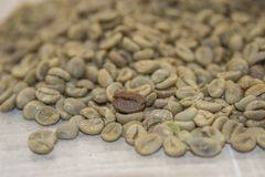 Raw coffee beans on a wooden base. A look at fresh, raw coffee beans on a wooden base Stock Images