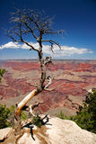 Look on Grand Canyon Royalty Free Stock Image