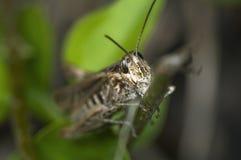 Look of grasshopper near Stock Photos