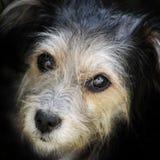 Look hungry stray dog Stock Photos