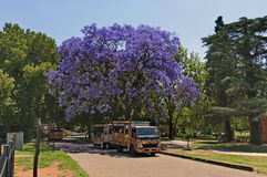 Look of Johannesburg zoo, South Africa. Attraction transport and jacaranda tree blossom in JHB zoo stock images