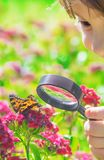 Look in a magnifying glass butterfly sits on flowers. selective focus
