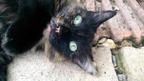 Look at me. Daisy The cat Stock Photos