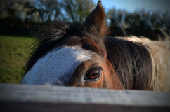 Look At Me. Taken in Pembrokeshire, April 2014 Royalty Free Stock Images